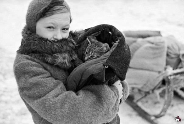 Как коты Родину защищали