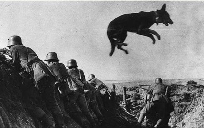 Последний рукопашный бой людей и собак с фашистами
