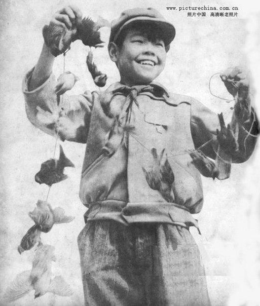 «Великий кормчий» Мао против воробьев: трагическая схватка века