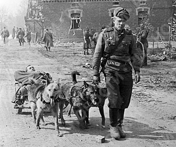 Собаки на войне