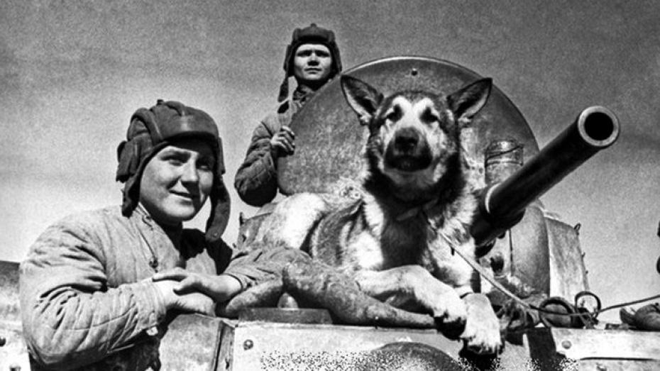 Мохнатый орденоносец. Парад победы — на кителе Сталина