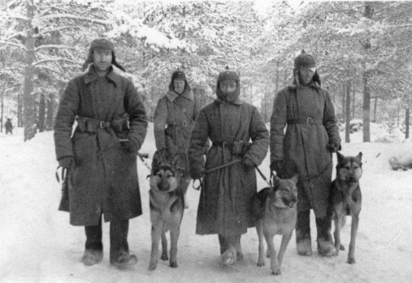 Мохнатые солдаты: как собаки Красной Армии бились против фашистов