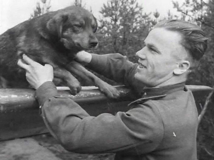 Дуэль русской собаки и немецкого пса