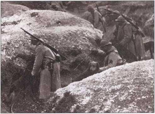 Четвероногие курьеры Первой мировой