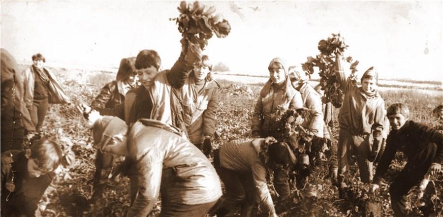 Сентиментальное путешествие на картошку – горожане в борьбе за урожай